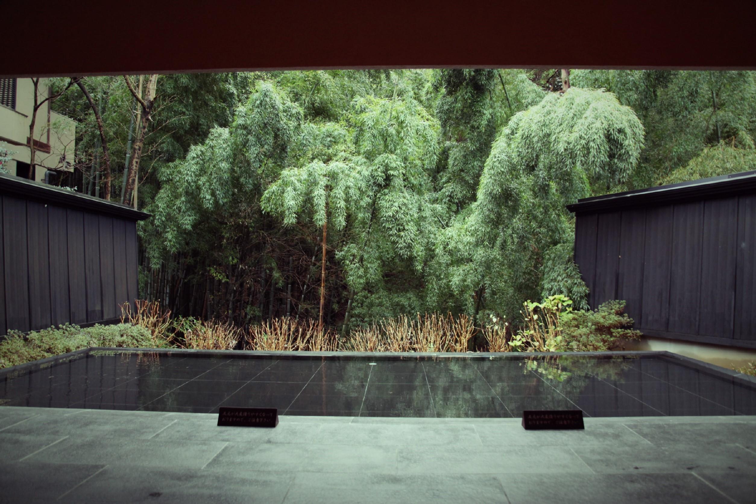森の栖から外観を覗くと、竹林が広がる