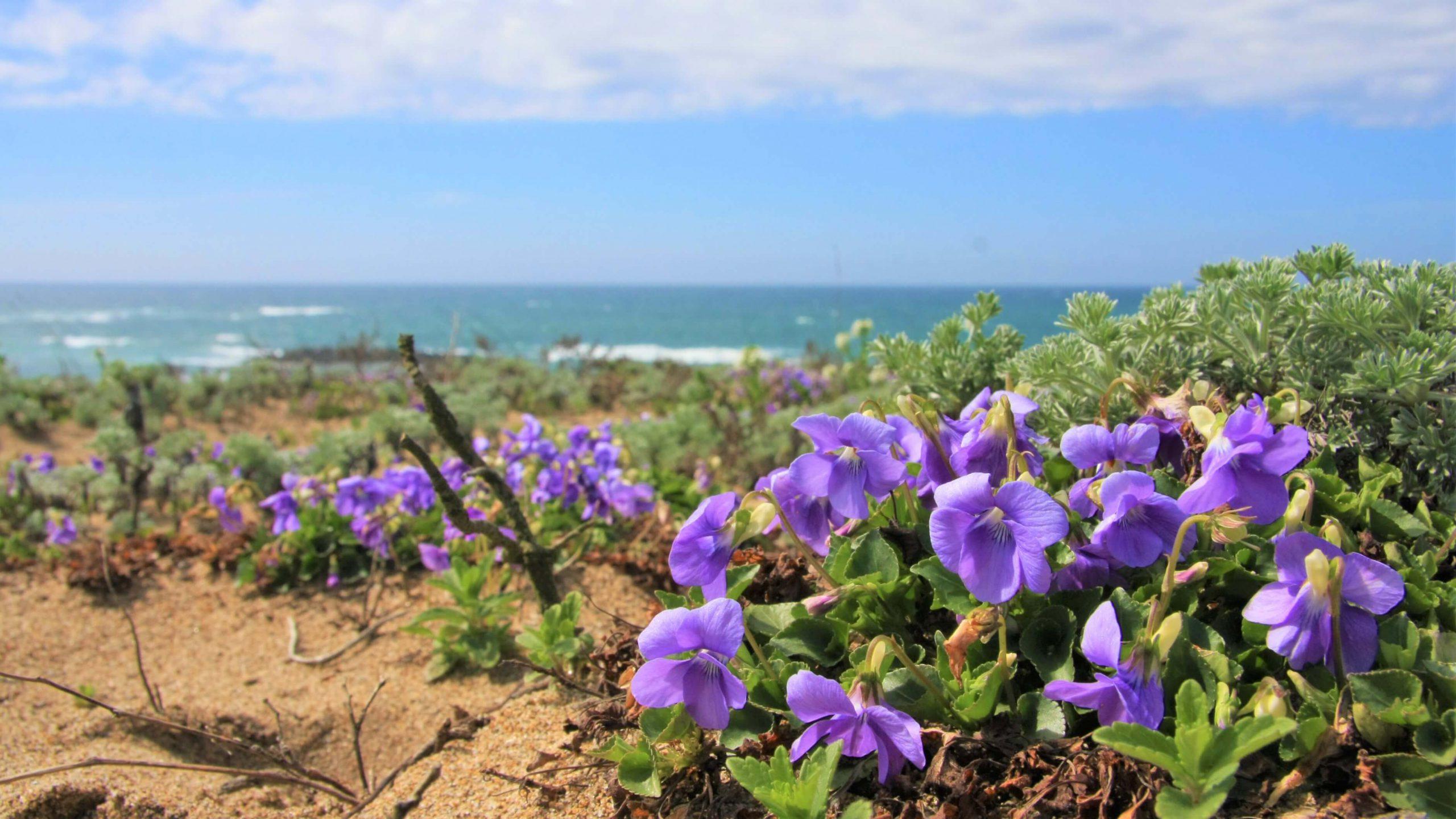 海岸とビーチと花